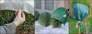 Rośliny, okrywanie na zimę